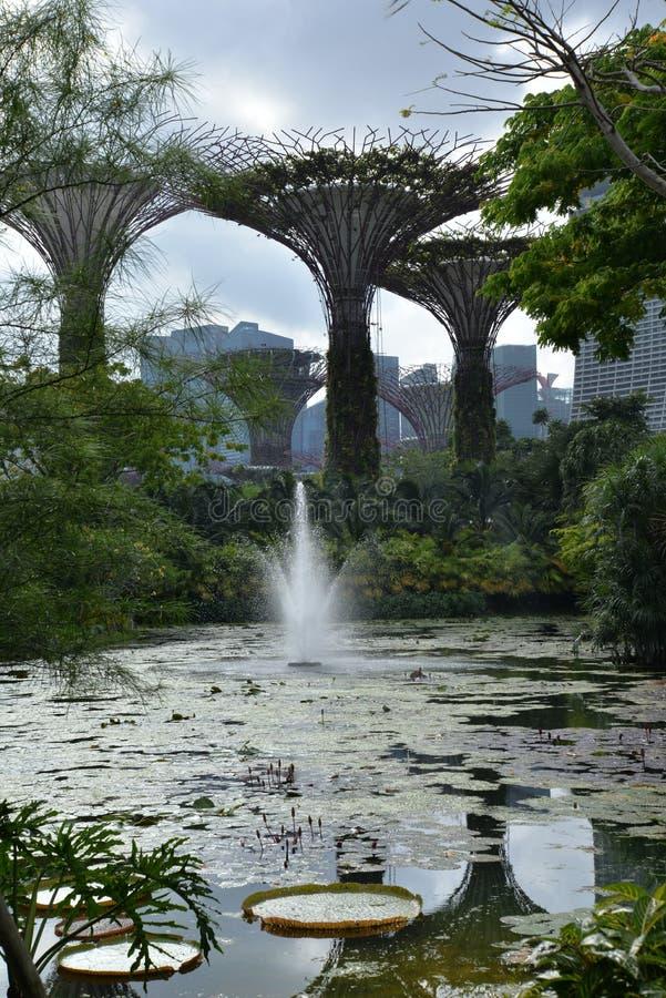 Supertree gaj, ogródy zatoką, Singapur obrazy royalty free