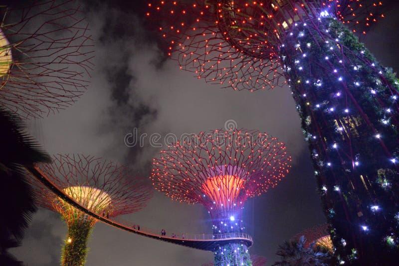Supertree gaj, ogródy zatoką, Singapur nocą fotografia stock