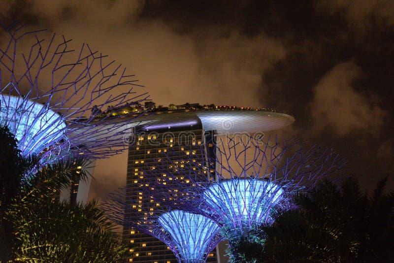 Supertree gaj, ogródy zatoką, Singapur nocą obraz stock