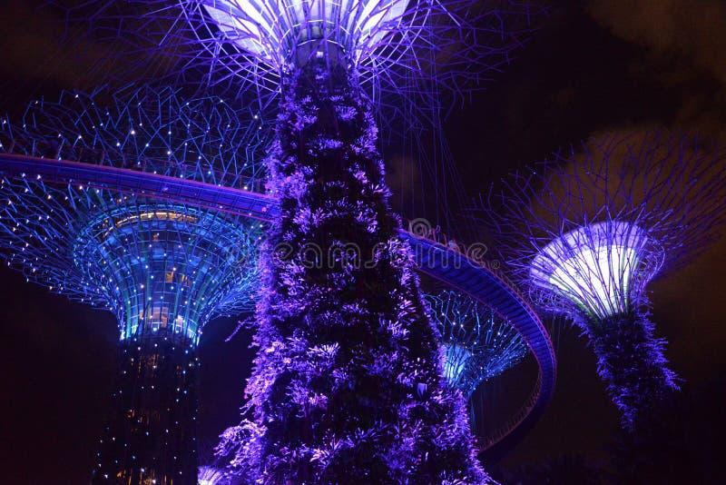 Supertree gaj, ogródy zatoką, Singapur nocą zdjęcia royalty free