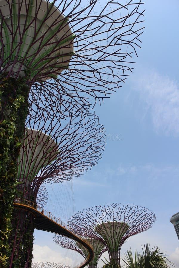 Supertree gaje przy Singapur ogródem zatoką fotografia royalty free