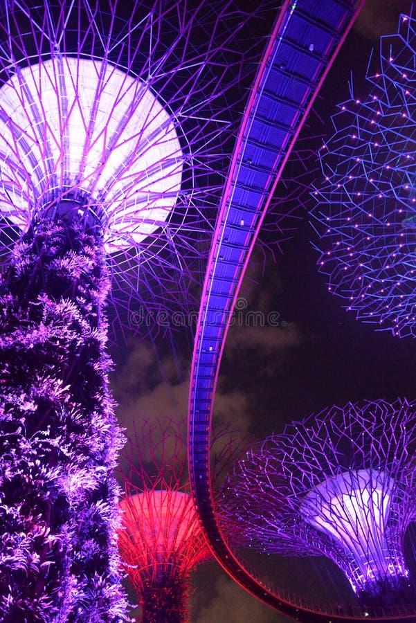 Supertree Grove, Gärten durch die Bucht, Singapur bis zum Nacht stockbild