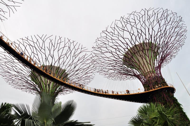 Supertree Grove OCBC Skyway, Gärten durch die Bucht, Singapur lizenzfreie stockfotos