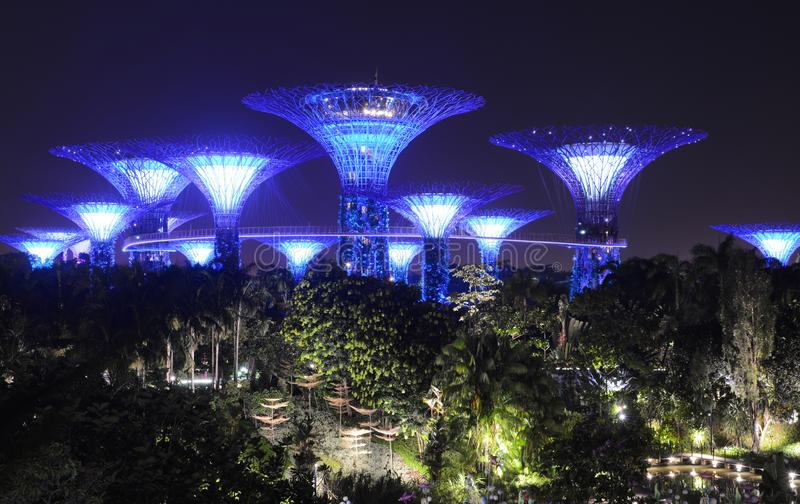 Supertree Grove rising above the night landscape at Gardens by the Bay royalty free stock photography