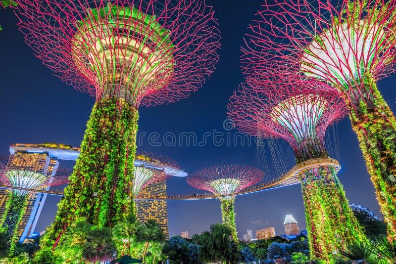 Supertree Grove Singapur lizenzfreie stockfotos