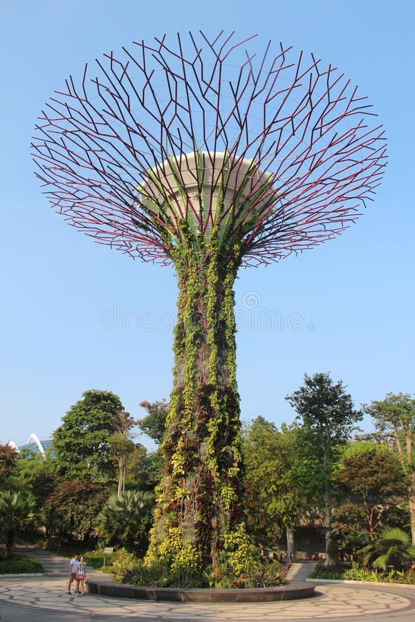 Supertree Grove in Singapur stockfotografie