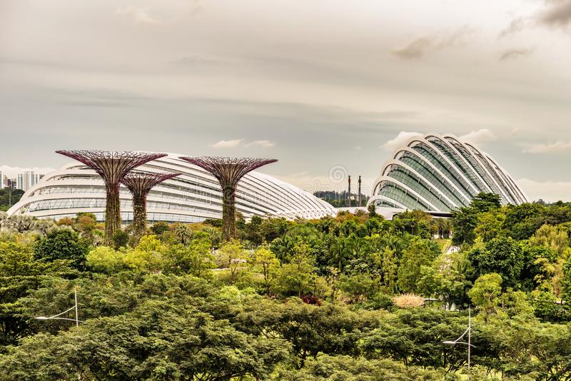 Supertrees, Supertree Grove at Gardens by the Bay in Singapore. Supertree Grove, Unique vertical gardens resembling towering trees, with canopies and colorful stock photography