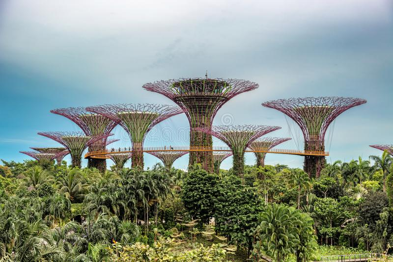 Supertrees, Supertree Grove at Gardens by the Bay in Singapore. Supertree Grove, Unique vertical gardens resembling towering trees, with large canopies and stock photos