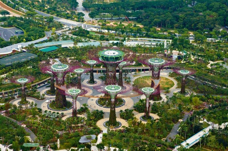 Supertree Waldung an den Gärten durch den Schacht, Singapur lizenzfreie stockbilder