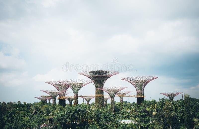 Supertree-Waldung im Garten durch die Bucht - Singapur lizenzfreie stockbilder