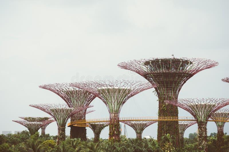 Supertree-Waldung im Garten durch die Bucht - Singapur lizenzfreie stockfotos