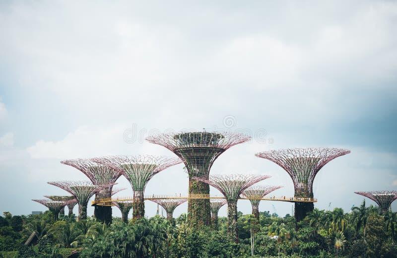 Supertree-Waldung im Garten durch die Bucht - Singapur stockfotografie
