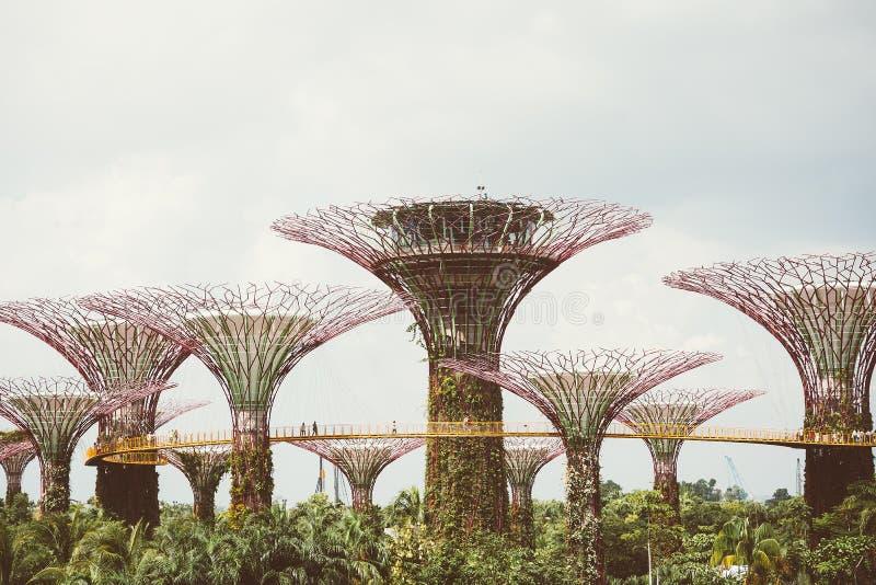 Supertree-Waldung im Garten durch die Bucht - Singapur stockbilder
