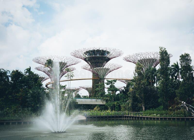 Supertree-Waldung im Garten durch die Bucht - Singapur stockfoto