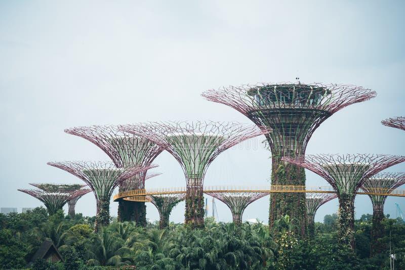 Supertree-Waldung im Garten durch die Bucht - Singapur lizenzfreies stockfoto