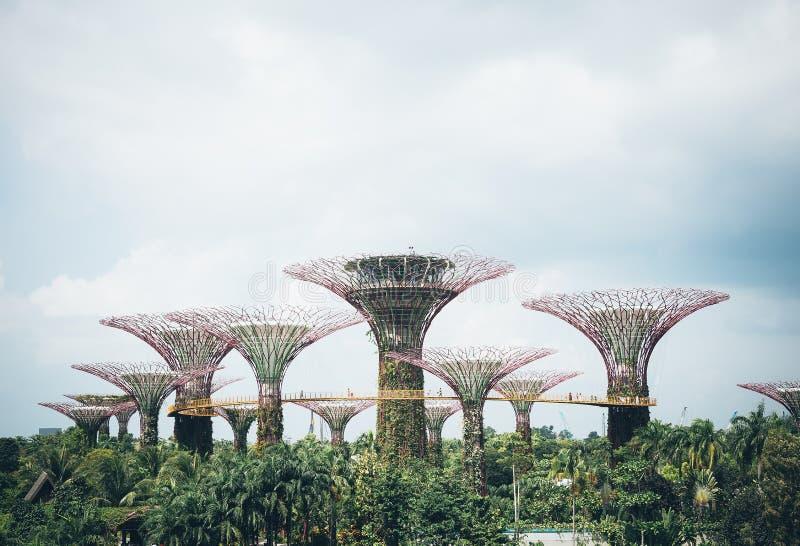 Supertree-Waldung im Garten durch die Bucht - Singapur lizenzfreie stockfotografie