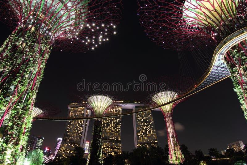 Supertreebosje met Marina Bay Sands bij Nacht royalty-vrije stock afbeelding