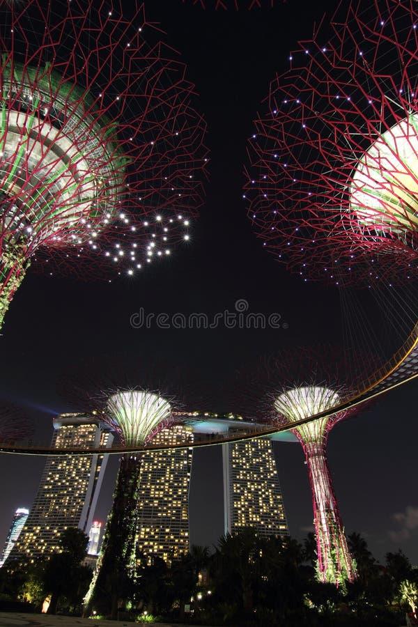 Supertreebosje met Marina Bay Sands bij Nacht - P stock afbeelding