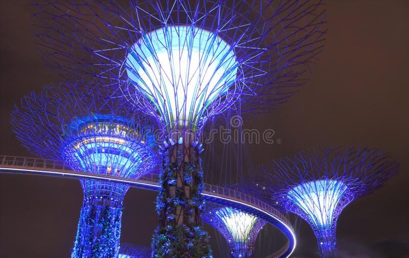 Supertreebosje Singapore royalty-vrije stock afbeeldingen