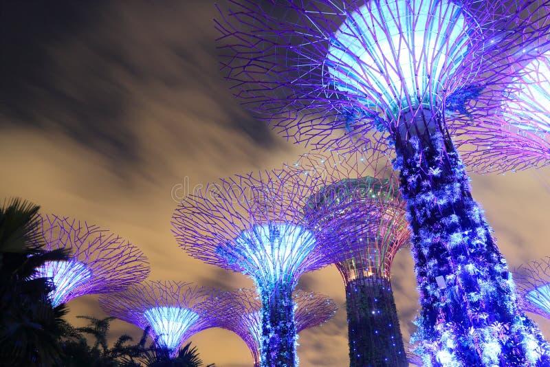 Supertreebosje Singapore stock afbeeldingen
