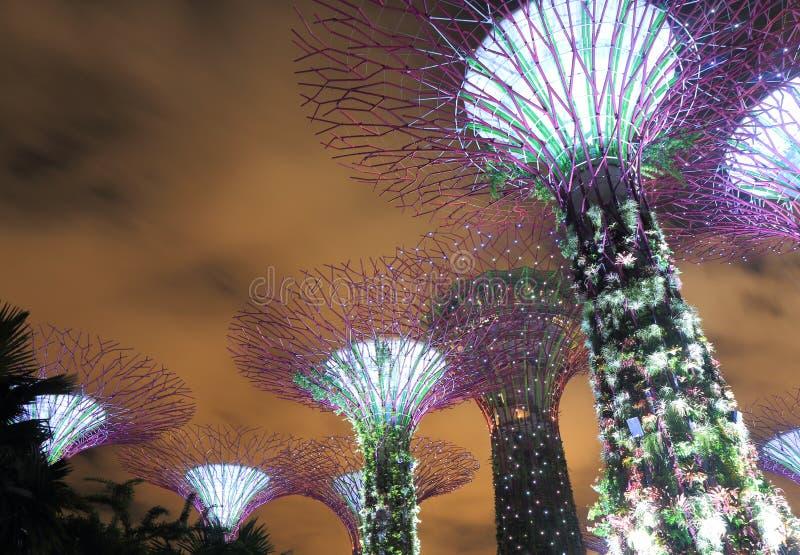Supertreebosje Singapore royalty-vrije stock foto