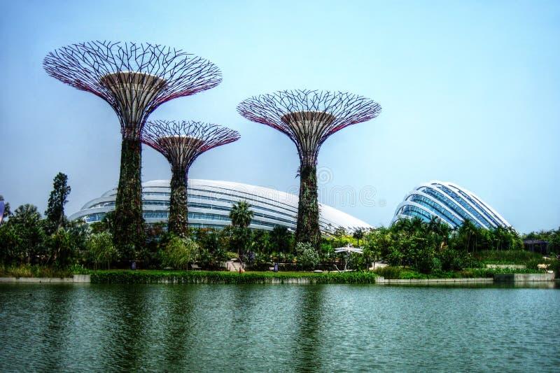 Supertrees温室和蜻蜓湖-新加坡-滨海湾公园 库存照片