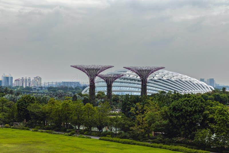 Supertrees на садах заливом в Сингапуре стоковое изображение rf