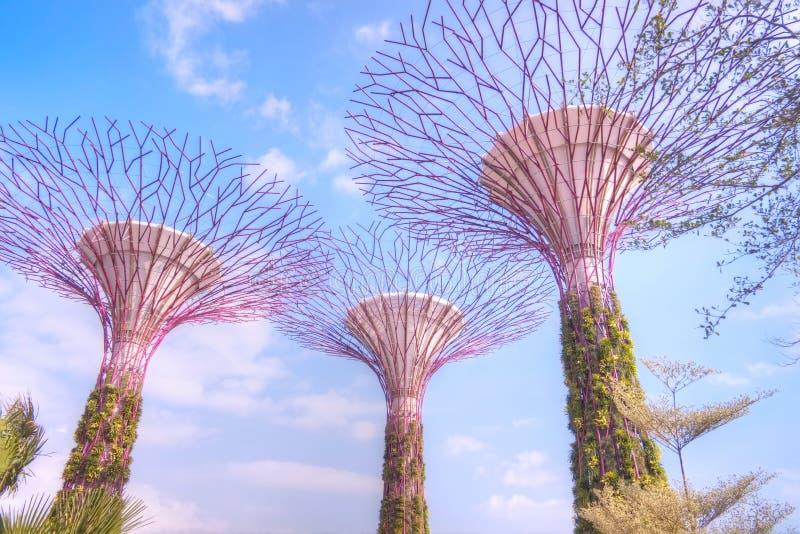 Supertrees, сады заливом, Сингапур стоковые фотографии rf
