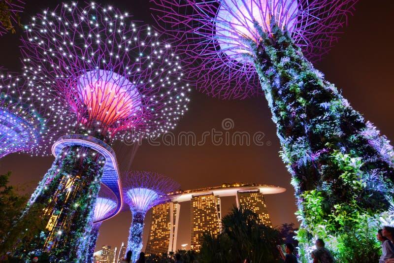Supertrees alla notte Giardini dalla baia Singapore immagini stock