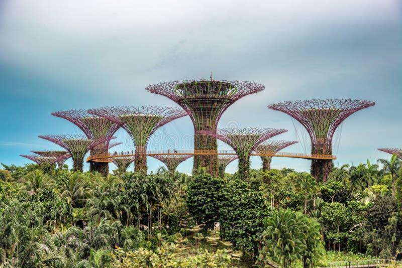 Supertrees, arboleda de Supertree en los jardines por la bahía en Singapur fotos de archivo