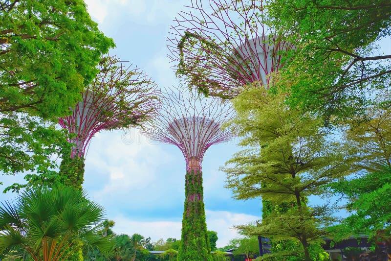 Supertrees avec le ciel bleu photographie stock
