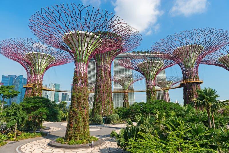 Supertrees bij Tuinen door het Baaipark, Singapore stock fotografie