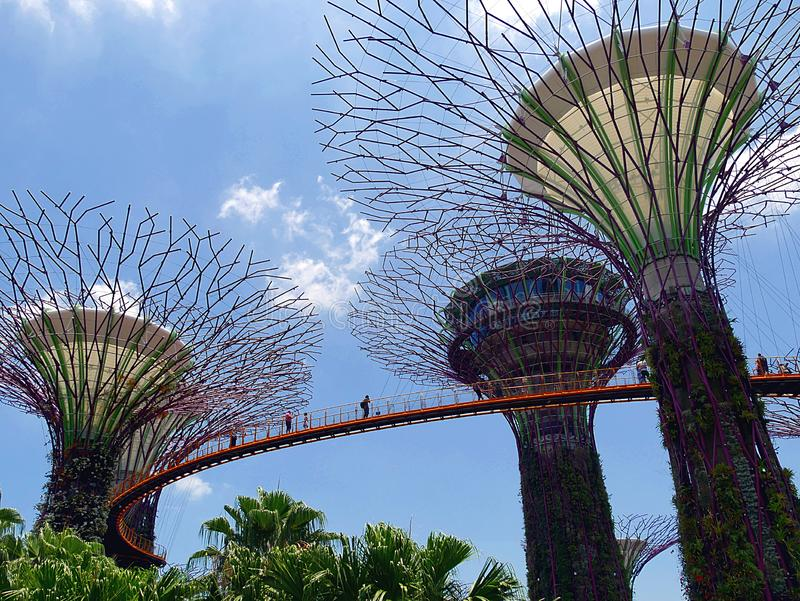 Supertrees e Skyway ai giardini dalla baia in Singaopre fotografie stock