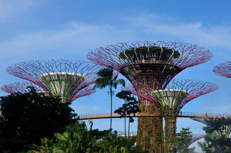 Supertrees et OCBC Skyway aux jardins par la baie Singapour image stock