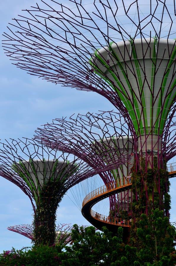 Supertrees et OCBC Skyway aux jardins par la baie Singapour photographie stock