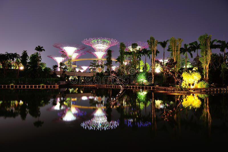Supertrees i trädgårdar vid fjärden i Singapore royaltyfri foto