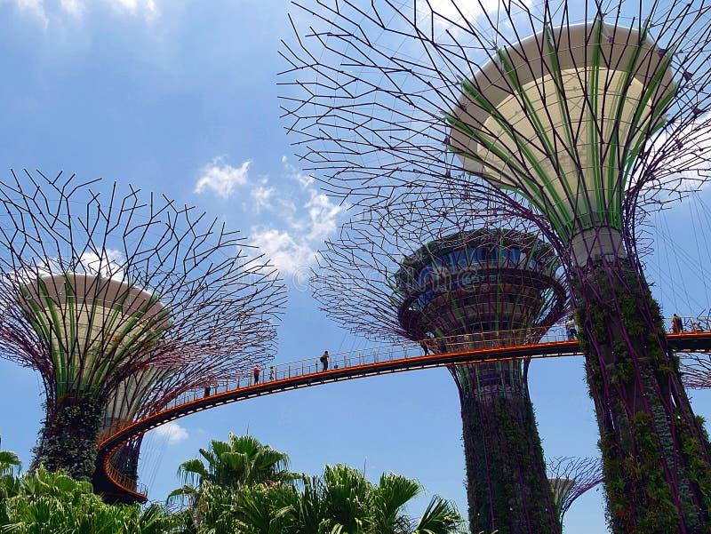Supertrees och Skyway p? tr?dg?rdar vid fj?rden i Singaopre arkivfoton