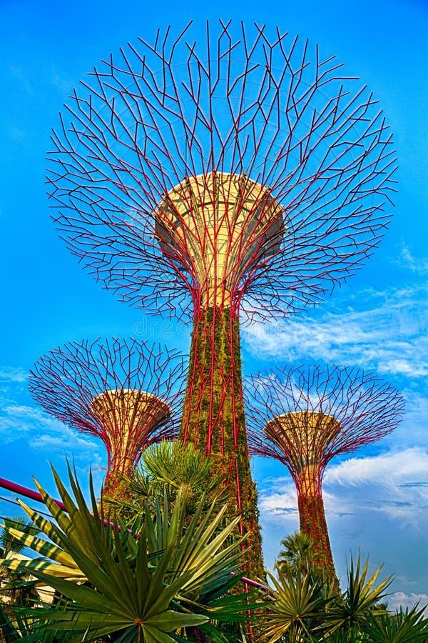 Supertrees på Marina Bay Sands, Singapore arkivbild