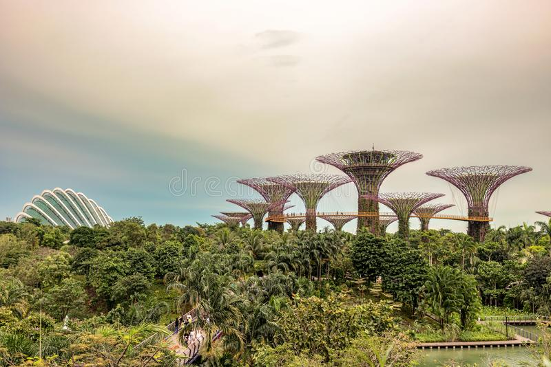 Supertrees, Supertree Grove at Gardens by the Bay in Singapore. Singapore - Jan 14, 2018: Tourists walking on platform on Supertree Grove, Vertical gardens stock images