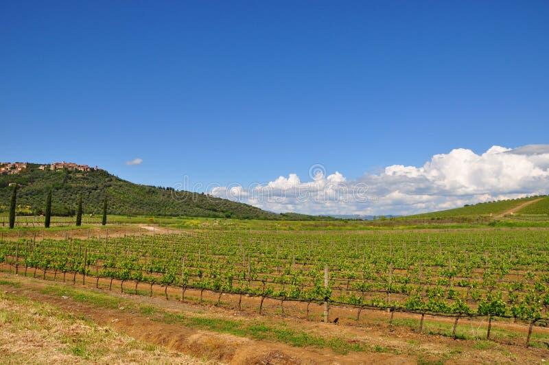 superTuscan sangiovese vingård Italien royaltyfri foto