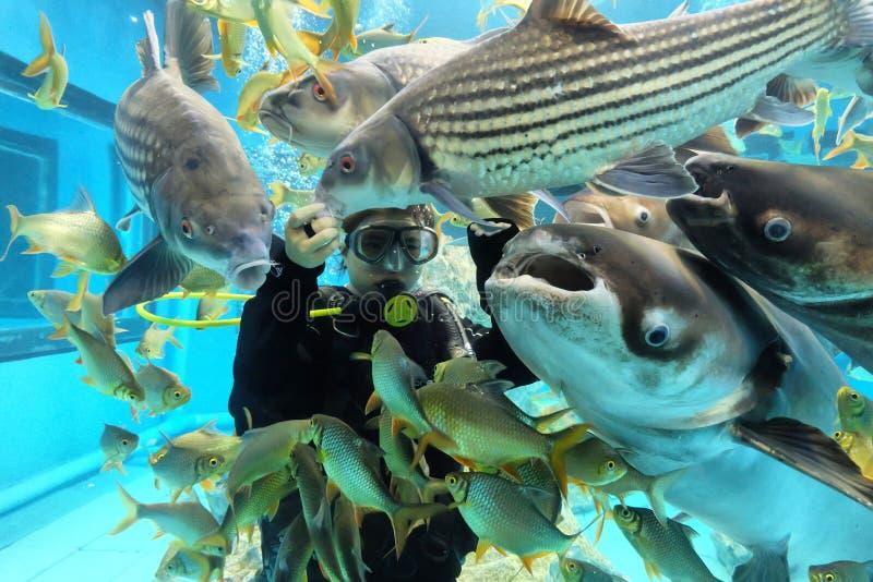 Suphanburi, TAILANDIA - 11 dicembre 2015: Operatori subacquei dell'acquario in tappo Chawak fotografie stock libere da diritti