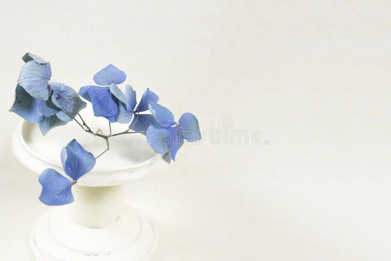Suporte branco da hortênsia azul seca imagens de stock