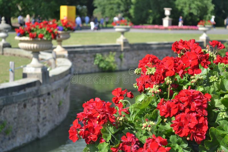 Suporte da flor imagem de stock royalty free