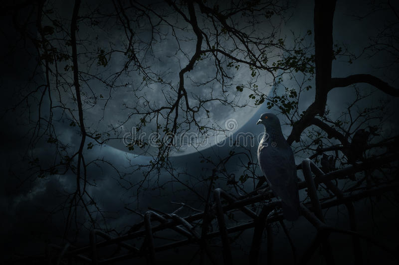 Suporte do pássaro na cerca velha sobre a árvore inoperante, a lua e o céu nebuloso, Mys imagens de stock