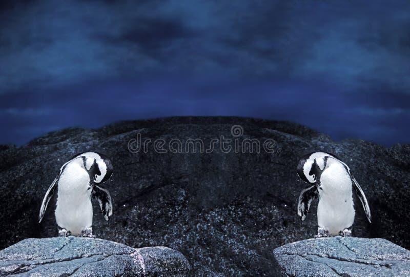 Suporte duplo dos pinguins de Magellanic em uma rocha na natureza Backg fotos de stock