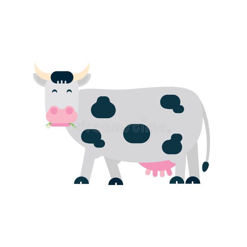 Suporte e mastigação manchados brancos pretos da vaca com grama em sua ilustração lisa do vetor do estilo da boca isolada no fund ilustração do vetor