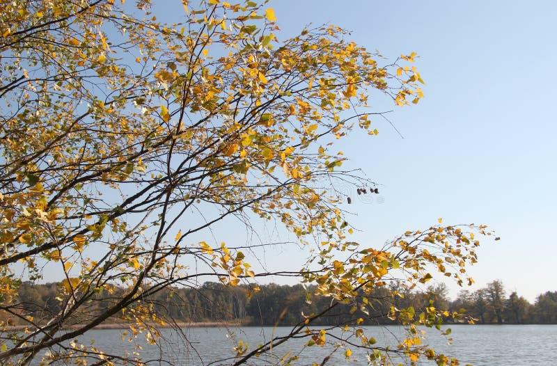 Suppengrün durch den See im Herbst stockfoto