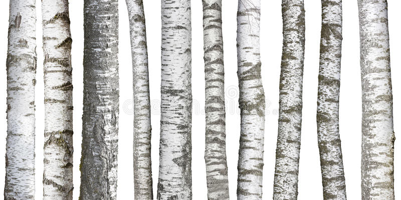 Suppengrünstämme auf Weiß stockfotografie