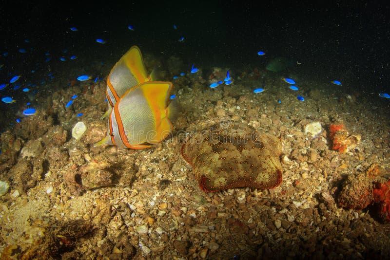 Suppenschildkröte Hatchlings stockbild