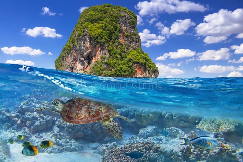 Suppenschildkröte Unterwasser in der Tropeninsel von Thailand stockfotografie